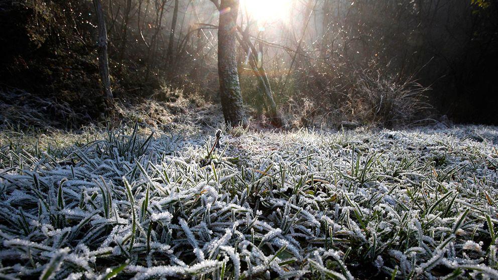 Efter tropisk hetta – nu blir det nattfrost