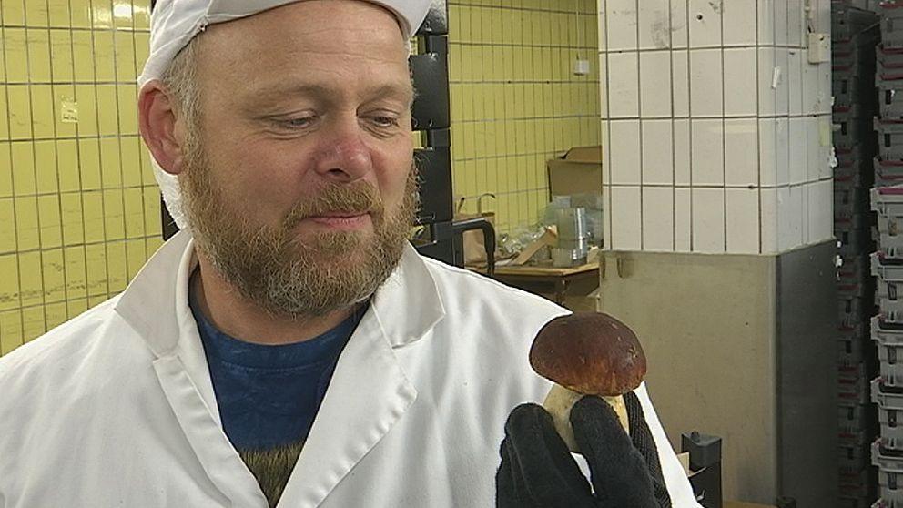 Ola Hultman kan svamp – och efter den fuktiga sommaren har han att göra.