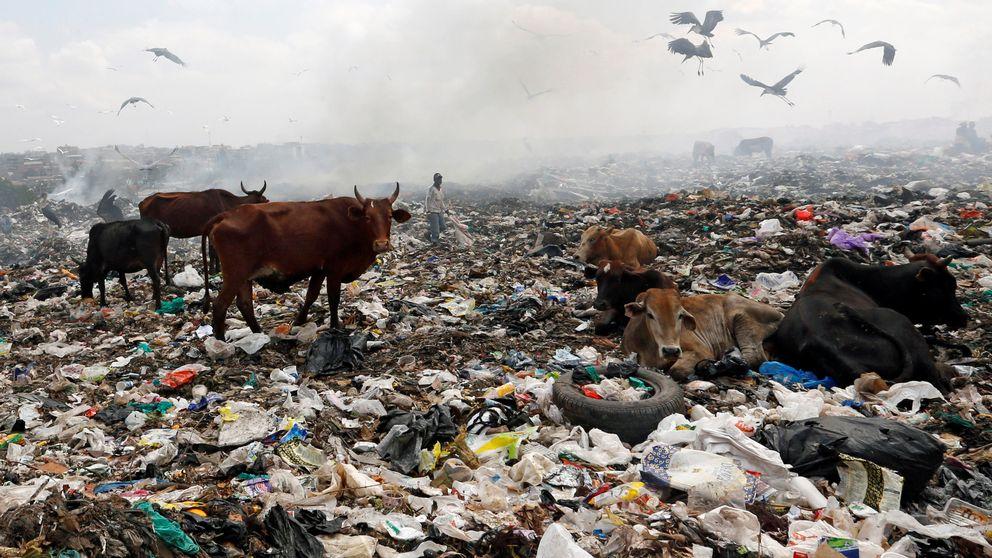Flera kor vandrar och ligger ner på en soptipp fylld av plastpåsar. I bakgrunden ses rök och fåglar som lyfter från marken.