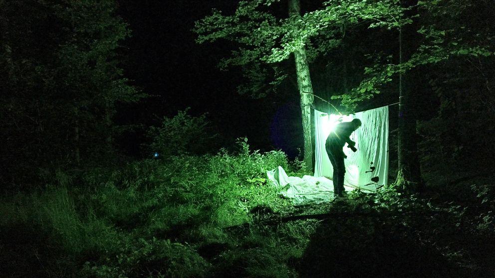 nattfjärilar, niclas wahlgren