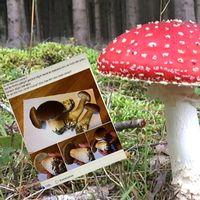 Flera personer ger sig ut i sociala medier för att ta reda på vad de har plockat för svamp, något som svampexperten avråder från.