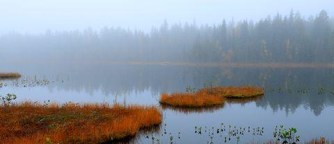 Höstens färger. Lautakoski, norra Tornedalen.