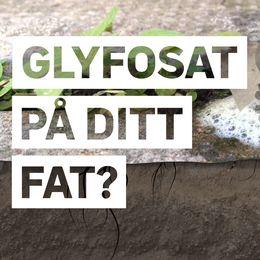 Grafik med genomskärning av växt med rötter som dör av bekämpningsmedlet glyfosat