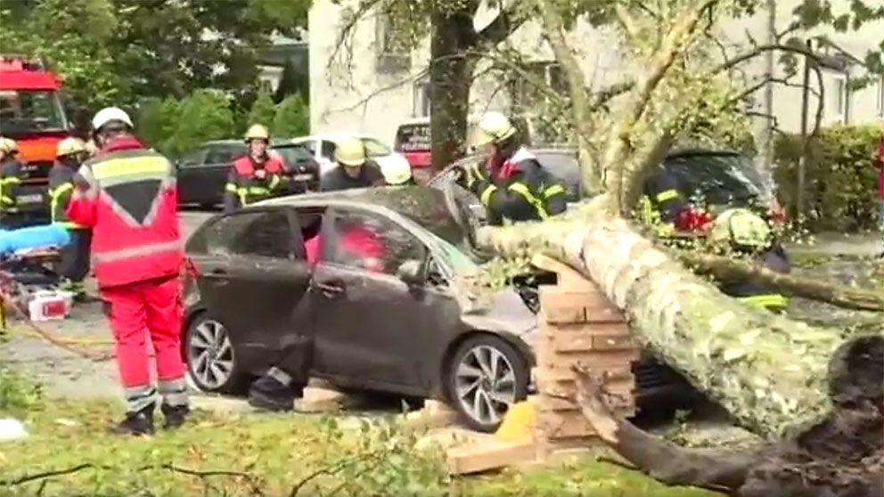 Ett nedfallet träd har totalförstört en bil