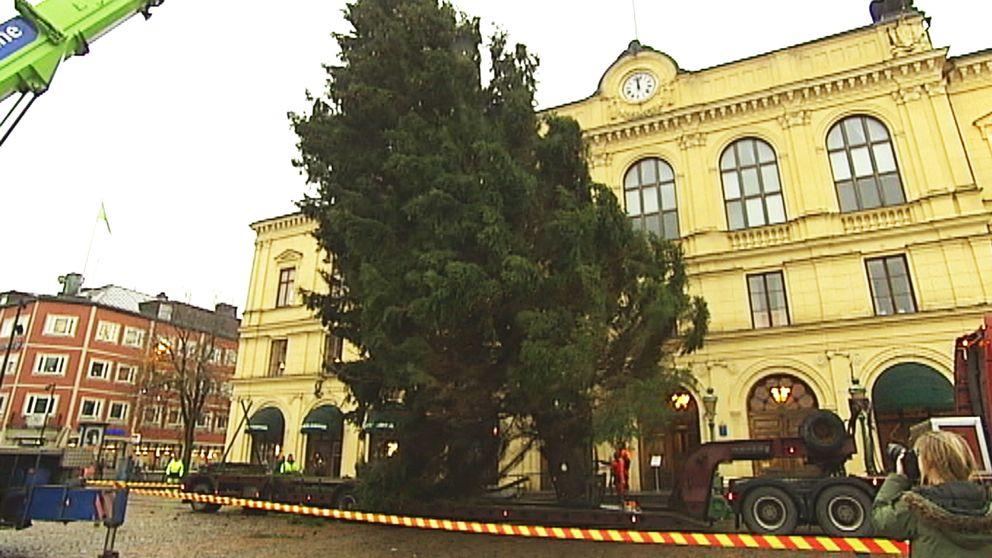Förra årets gran på Stora Torget i Karlstad kom från Forshaga