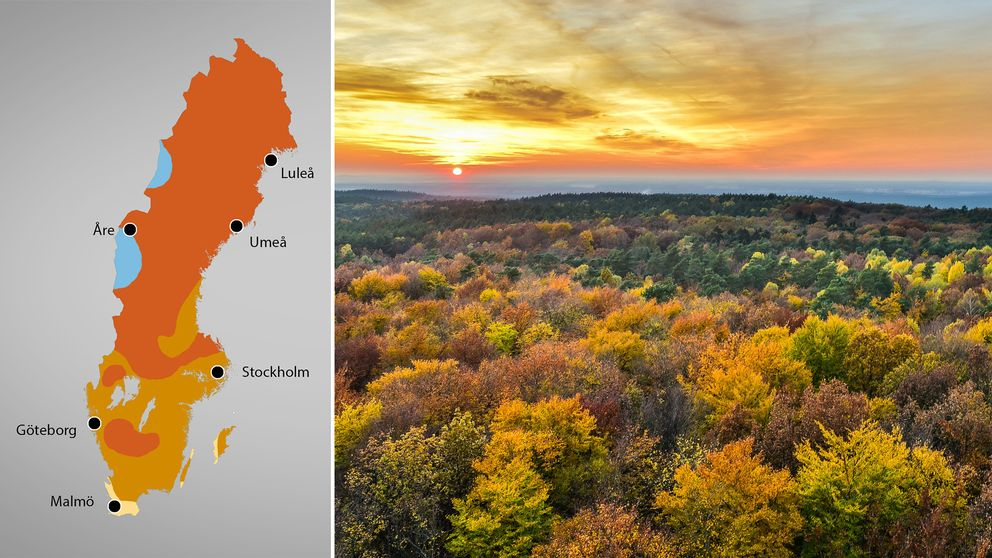 En Sverigekarta med fördelningen över temperaturerna. till höger en vy över träd i höstfärger.