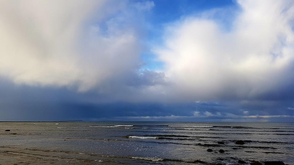Björkhaga på Gotland.