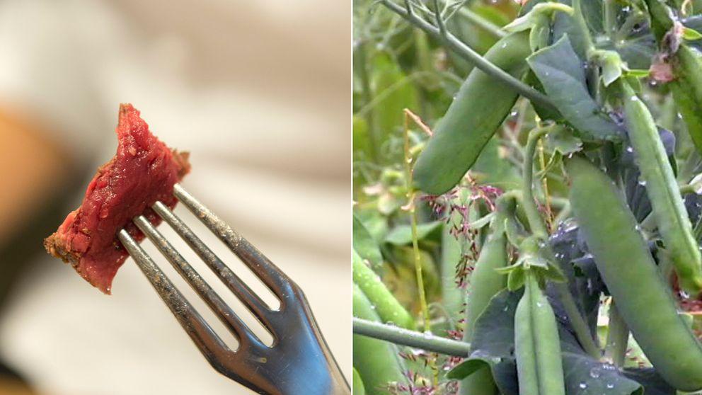 Målet med forskningen på den svenska ärtan är att hitta nya vegetariska alternativ till kött.