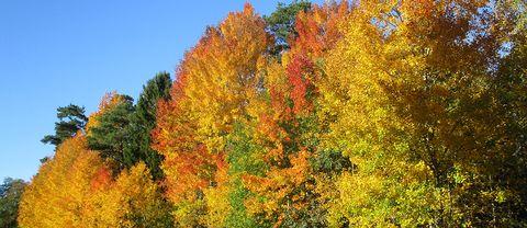 Fantastisk höstluft fantastiska höstfärger i Gustavsberg, Värmdö 18 oktober.