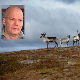 Lars-Anders Gillenbjörk är renskötare bosatt i Jokkmokk