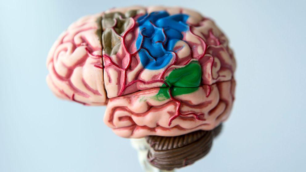 Modell av människohjärna