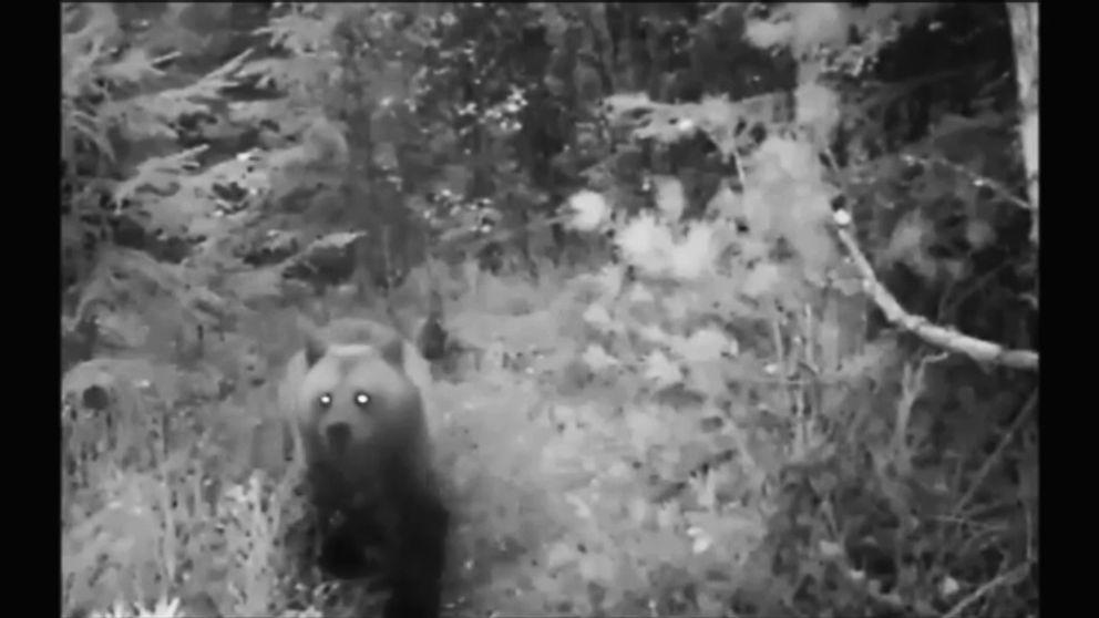 En björn syns i skogen på en svartvit bild