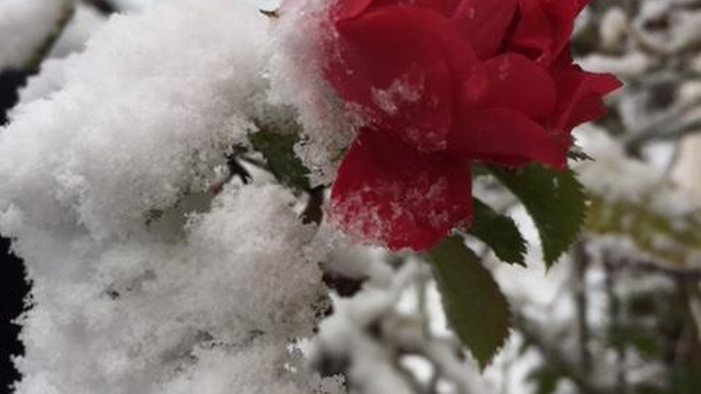 Snön överraskade inte bara oss. Bilden är tagen idag 19/11 i Lundsbrunn, Götene kommun.