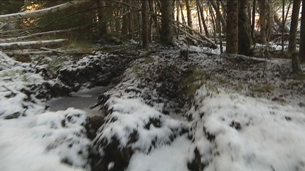 djupa hjulspår i skogsmark, lite snöpuder på