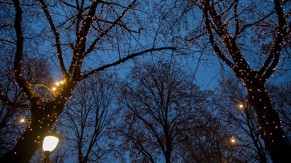 julbelysning en mörk vinternatt