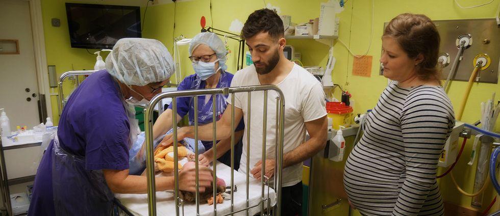 Ettåriga Ofelia är att av de SMA-sjuka barn som fått behandling med Spinraza. Här ligger hon i en sjukhussäng med sin mamma, pappa och två personer i sjukhuskläder.