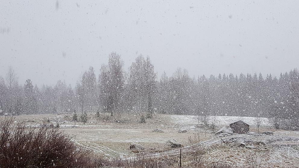 Stoora, stora snöflingor!! Enviken, Dalarna.