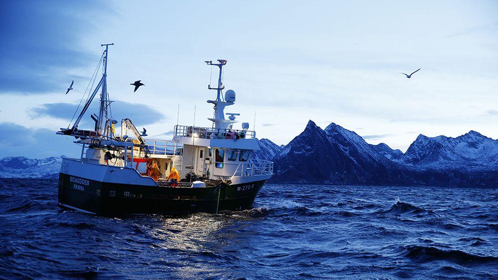 Mindre kvoter för rödspätta nästa år. Men mer torsk.
