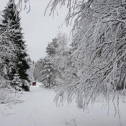 Så här jullikt har vi idag i Strömsdal.Lite nysnö och temp på nollan