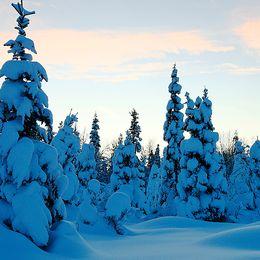 I decembermorgonens stillhet smekte midvinterljusetden sammetslena snön. Skidtur i vinterkyla, -20 grader.Det råder Polarnatt norr om Polcirkeln.Norra Tornedalen. Lautakoski 14 december
