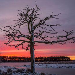 Solnedgång över Dellensjöarna i Hälsingland den 3:e advent.