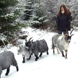 Bella Forss är ute på promenad med getterna på gården i Grimeton.