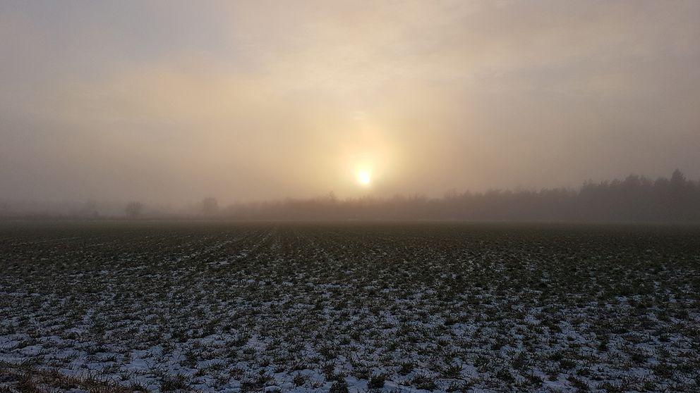 En blek januarisol i dimma Ullevi på östra Öland i eftermiddag.