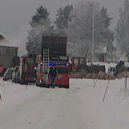 Lastbilssläpet med hundra grisar som vält i en trafikolycka