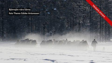 Björnsjön nära Särna
