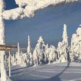 Kåbdalis i Norrbotten, 19 feb.
