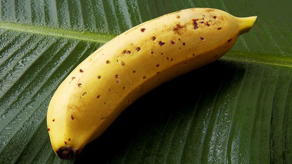Mongee-banan. Mongee betyder ungefär otrolig eller fantastisk.