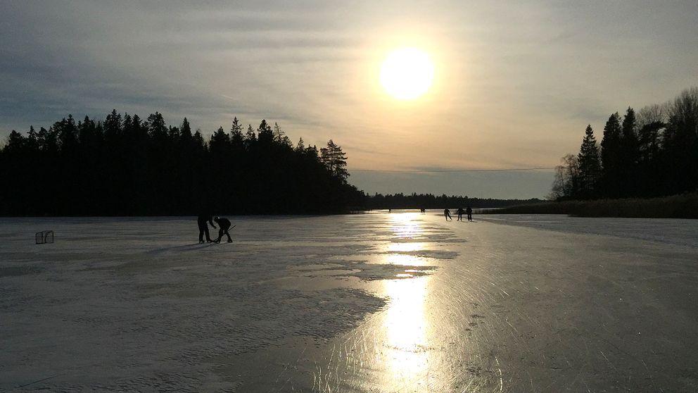 Folk som åker skridskor i solnedgång på sjön Trehörningen