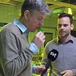 Här smakar vår reporter Henrik Kruusval på den fiskgödslade salladen.