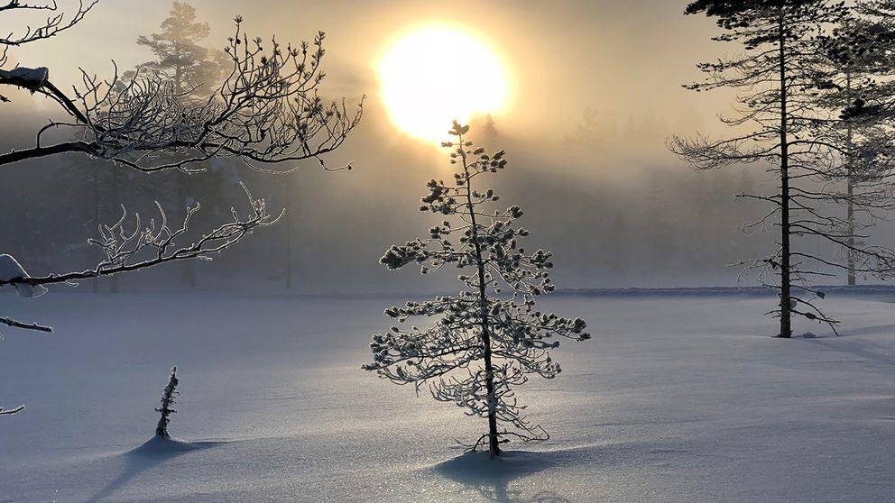 Den här vintern kommer gå till historien som en av de vackraste! Bilden är tagen från min morgon i Harsas skidspår i Järvsö, söndag 11 mars kl 07:15, -13, precis när solen skall skrämma bort dimman.Jag bor i ett paradis!