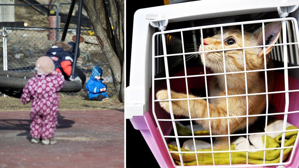 Förskoleungar och en katt i bur.