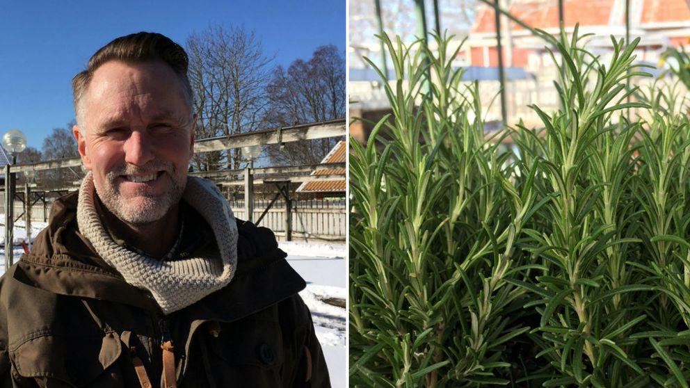 Fredrik Nyström, trädgårdsmästare, växt