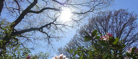 Somrigt i Kalmar, naturen fullständigt exploderar 7 maj