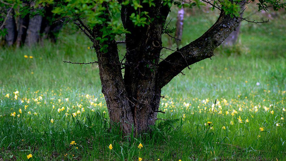 natur ängsmark