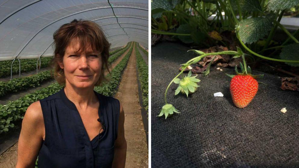 Porträtt på jordgubbsoldaren Bitte Wilson och närbild på jordgubbsplanta.