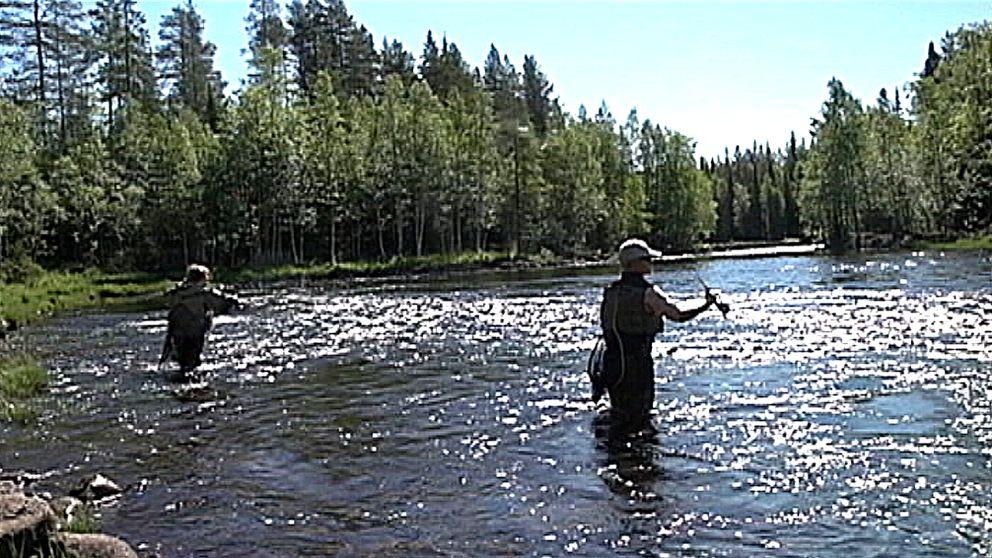 Flugfiskare
