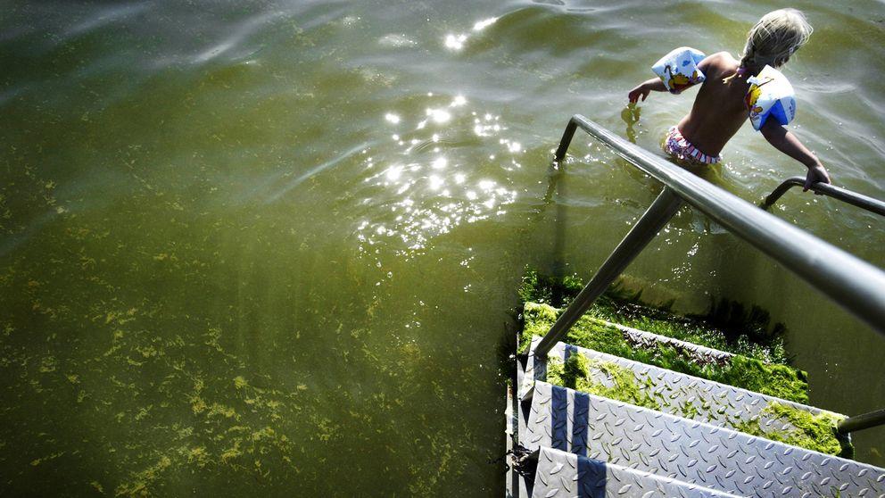 Barn som badar i vatten med cyanobakterier.