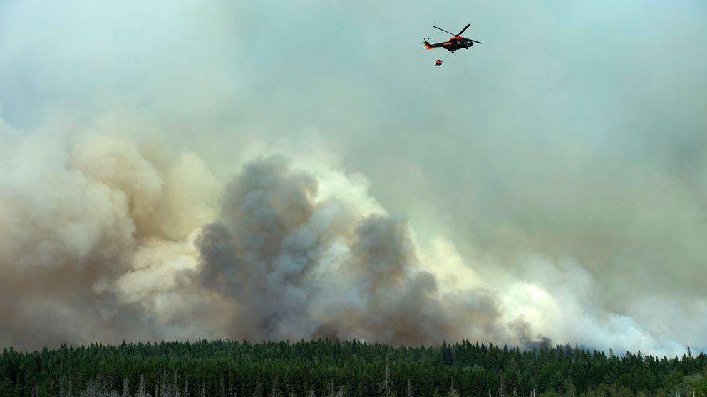 helikopter som vattenbombar, skog och stora kraftiga rökmoln
