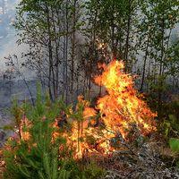 Skogsbrand utanför Kisa på lördagkvällen