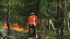 räddningsmanskap i skogen, brinner på marken