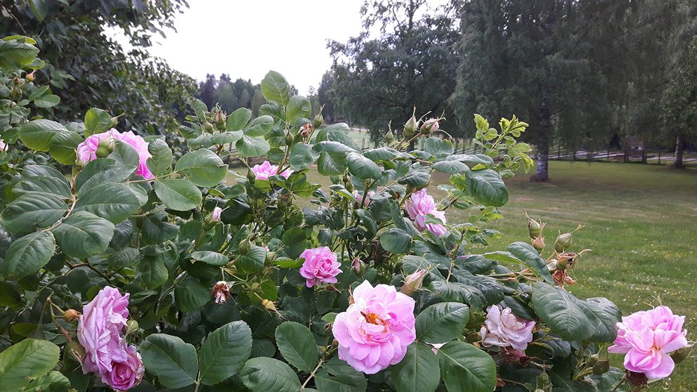 Lillkyrka, Närke, 18 juni