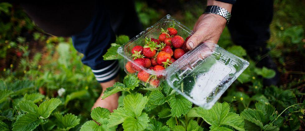 Risk för brist på jordgubbar