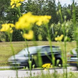 Bil kör vid blommig vägkant.