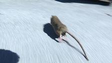 Råttorna springer ogenerat omkring i bostadsområdet Johannedal norr om Sundsvall.