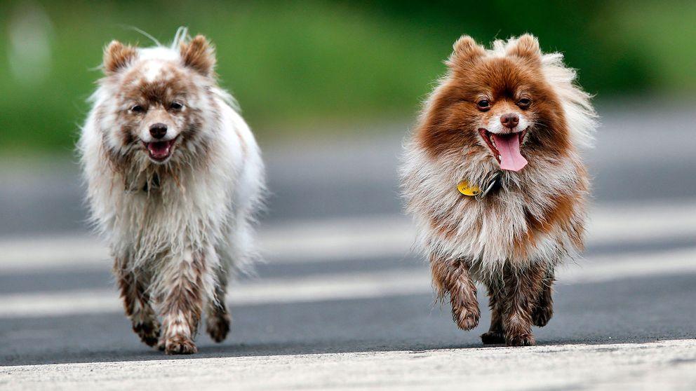 hundar, hundpromenad, utan koppel, hundägare, husdjur, hundrastgård