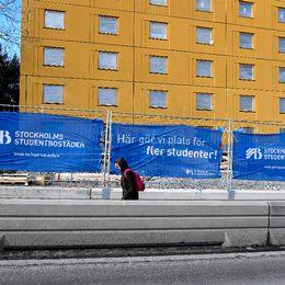 Batgaster lockas till stockholm